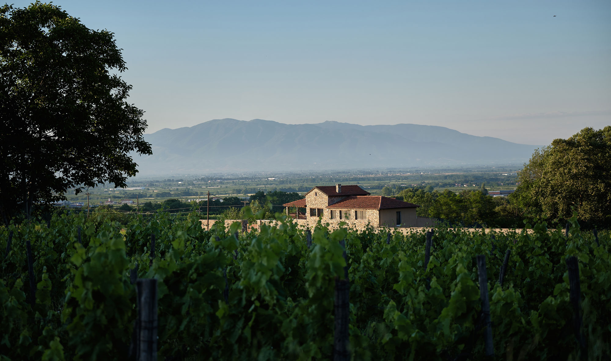 Our story | Vineyards | Greece